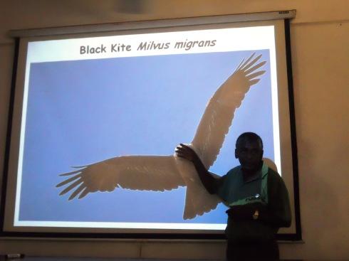 21 - Black Kite