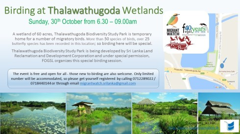 birding-at-thalawathugoda-30th-oct-final